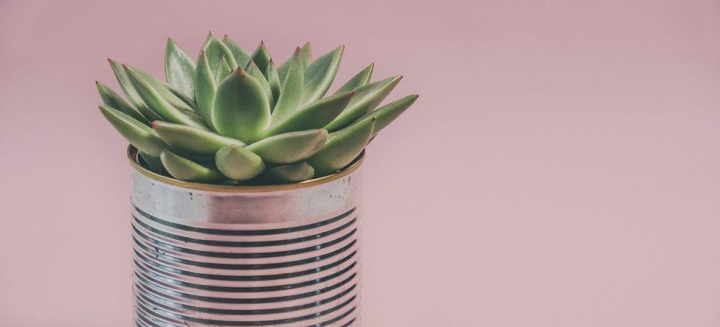 come piante nel deserto